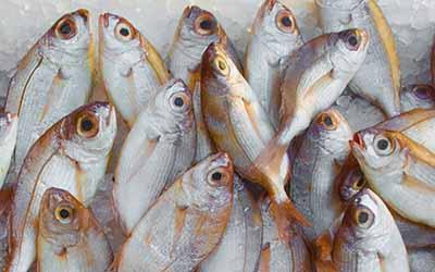 LED Licht für Fisch und Tiefgefrorenes